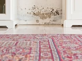 mould in living room health