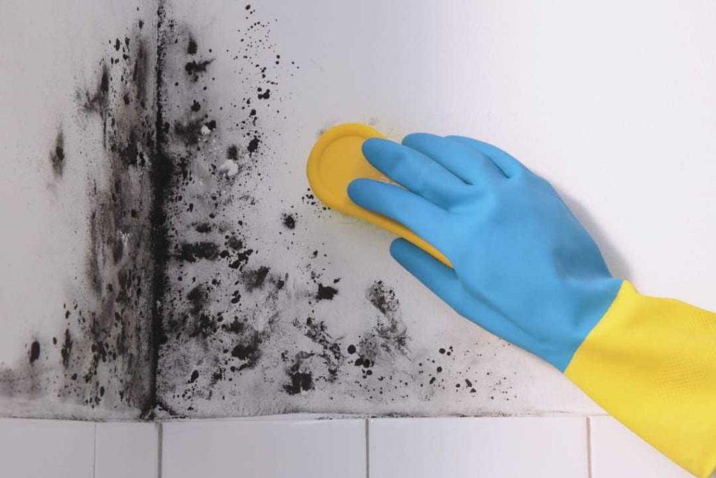 Treating mould in the bathroom