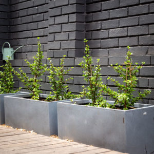 Cape Town home renovation planters
