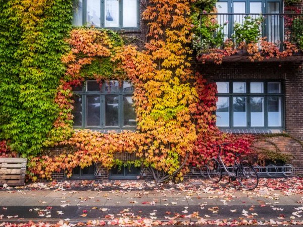 building with autumn leaves and colours