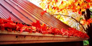 autumn house maintenance leaves in gutter